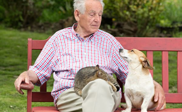 Un perro y una persona mayor: ¡la mejor combinación!