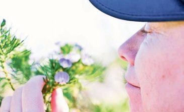 Los riesgos de perder el olfato en la tercera edad